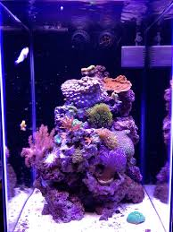 Fluval Sea Marine And Reef Led Strip Lights by Facebook Fan 15 Gallon Column Aquarium Lit By Ecoxotic Stunner
