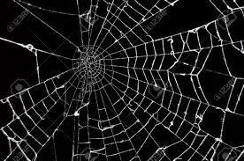 halloween nature background spider spider web background wallpapersafari