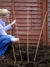 how to plant climbing plants hgtv