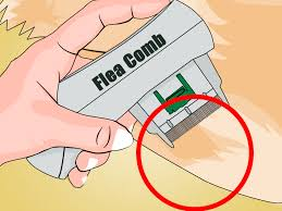 How Long Do Fleas Live In Carpet 2 Easy Ways To Kill Fleas With Dawn Dishsoap Wikihow