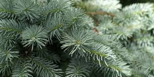 cleaning up tree pine needles how to clean up