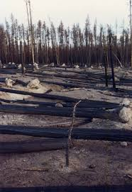 yellowstone national park thanksgiving disaster in yellowstone park 20 years after the fires it u0027s