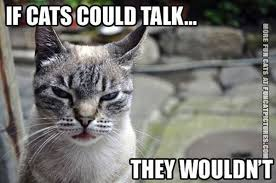 Talking Cat Meme - if cats could talk fun cat pictures