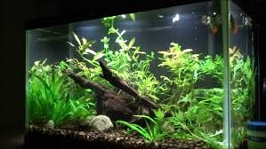 10 gallon planted tank led lighting gallon aquarium gallon aquarium lighting maxresdefault planted tank