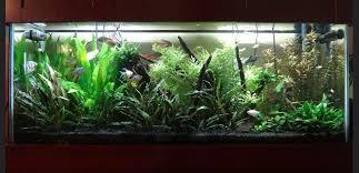 10 gallon planted tank led lighting 75 gallon freshwater aquarium with two grobeam led 1000 30 watt