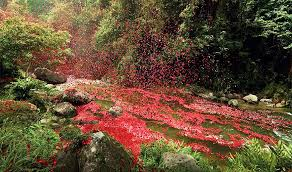 volcano flowers 8 million flower petals on a in costa rica