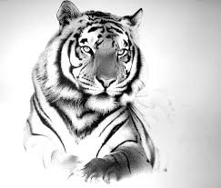 drawn artistic tiger pictures tiger big by amraa traditional art
