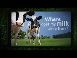 where does my milk come from