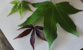 Identify Flowers - plant identifier apps to id leaves and flowers gardenista