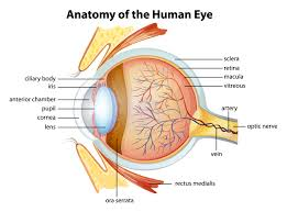 treatment for eye infections inflammation other