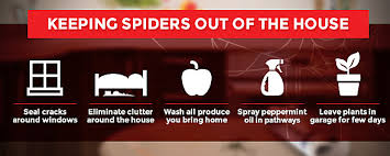 How To Keep Spiders Out Of Your Bed How To Get Rid Of Spiders In The House