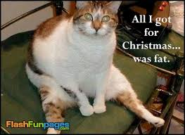 funny christmas pictures ecards for facebook