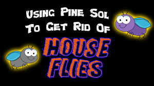 diy using pine sol to get rid of house flies youtube