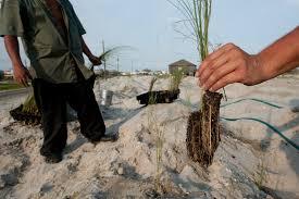 native plants of alabama env021 00072 joel sartore