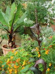 Best Flowers For Small Pots Large Size Of Garden Ideasawesome Container Garden Ideas Cool