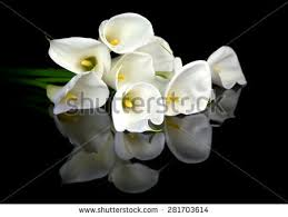 calla bouquet calla lillies bouquet stock images royalty free images vectors