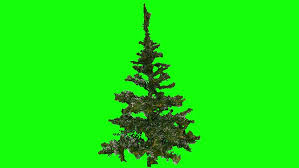Decoration Without Christmas Tree by Christmas Tree With Christmas Tree Decorations Rotating On Green