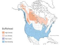 Duck Migration Map Bufflehead Waterfowl Id