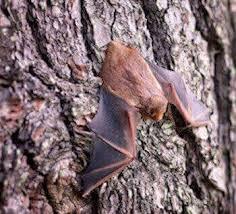 bat removal los angeles ca pest removal nj