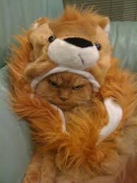 Kitten Halloween Costumes Pet 64 Halloween Pets Images Animals Animal