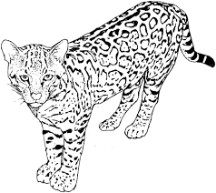 cat coloring pages for adults throughout free eson me