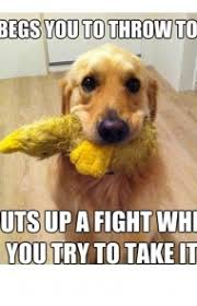 Hyper Dog Meme - 45 funny dog memes dogtime