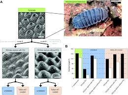the springtail cuticle as a blueprint for omniphobic surfaces