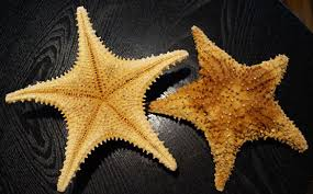 wholesale starfish starfish craft shell stands