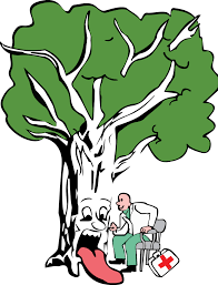 Brockley Tree Service London tario