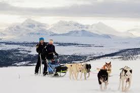 Lapland Husky Sled Safari from Tromso provided by Tromso Safari