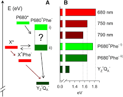 color spectrum energy levels defining the far red limit of photosystem ii in spinach plant cell