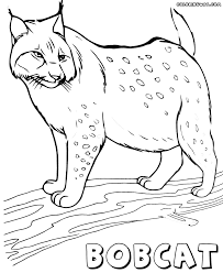 lynx coloring pages coloring pages to download and print