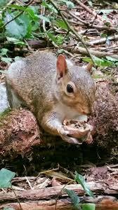 spirit halloween queensborough 1766 best adorable images on pinterest animals chipmunks and