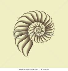 spiral shell tattoos pinterest læder