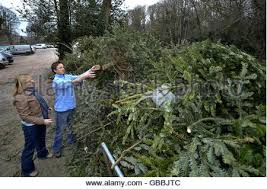 christmas tree collection point for recycling in sydenham wells