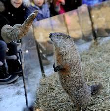 photos groundhog 2017