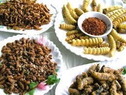 insectes cuisine des insectes dans nos assiettes paléo régime