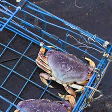 Delaware Traveling Jobs images Fishing crabbing in delaware usa today
