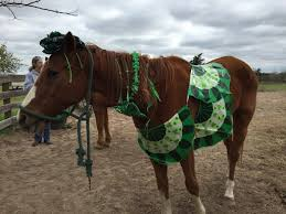 come vote for your favorite cute st patricks day horse picture