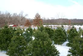 Washington Christmas Tree Farms - heritage valley tree farm l real christmas tree l washington