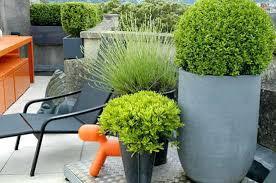 roof garden design ideas medium size of amazing roof garden design