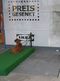 dog parking at ikea the bark