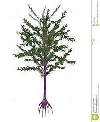 dicroidium prehistoric seed plant 3d render stock illustration
