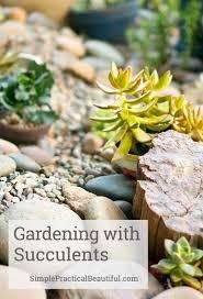 Succulent Rock Garden by Planting A Succulent Garden Simple Practical Beautiful