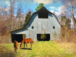 Photos Of Old Barns Horses Call This Old Barn Home Photograph By Sandi Oreilly