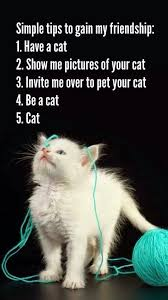Funny Cat Lady Memes - just too cute 22nd april 2015 gain friendship and cat