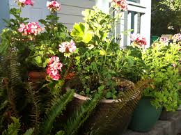 5 tips for landscaping small spaces container gardens for patios
