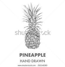 botanical sketch stock images royalty free images u0026 vectors
