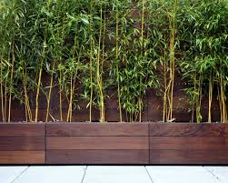 if you are looking for screening our bamboo trees in a trough are