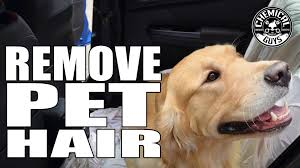 How To Remove Dog Hair From Car Upholstery How To Remove Pet Hair Chemical Guys Professional Rubber Pet